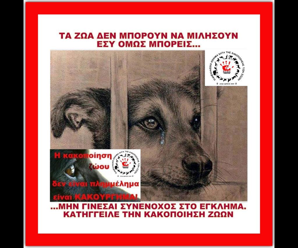 stop-animal-abuse-4