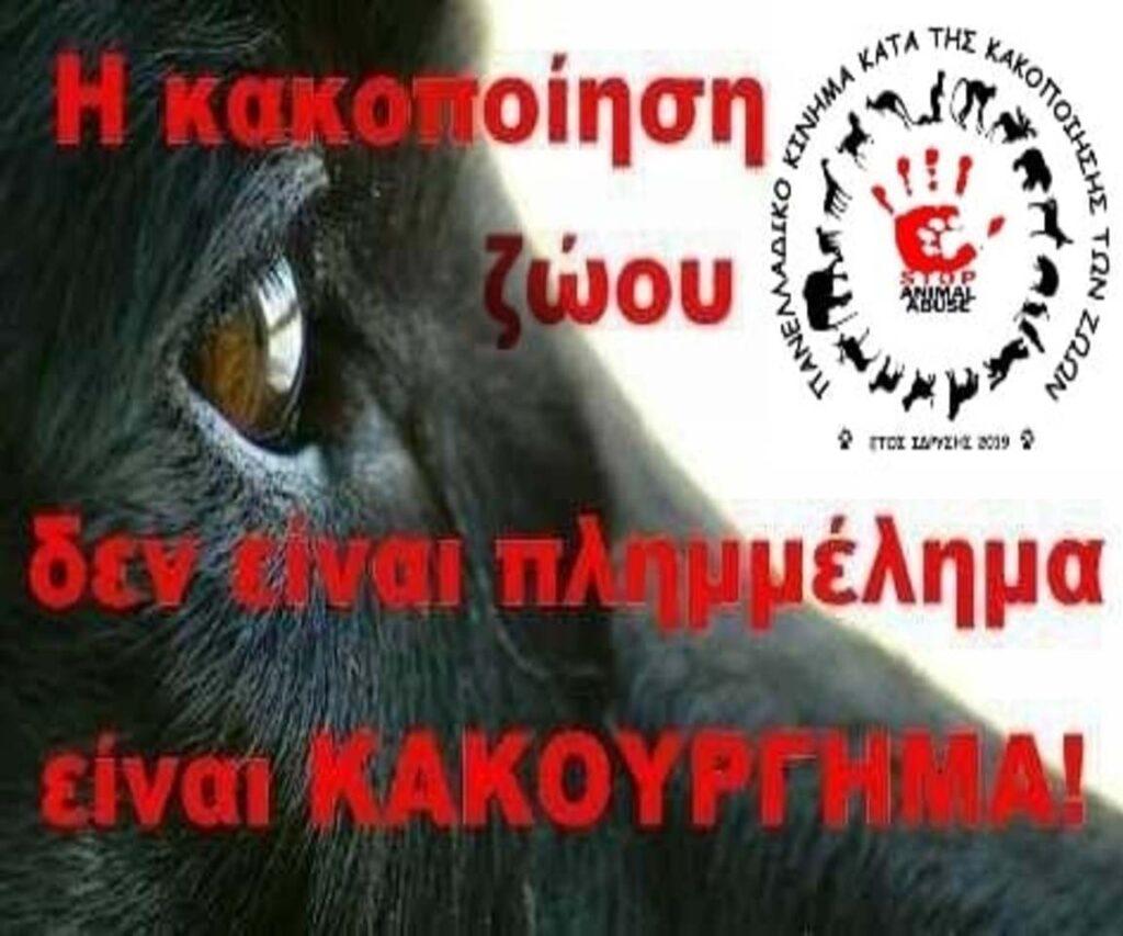 stop-animal-abuse-8